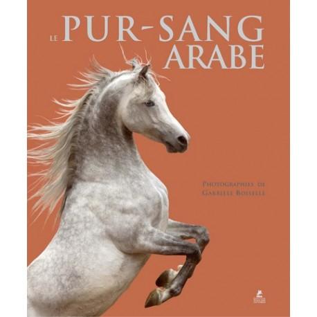 Pur-sang arabe