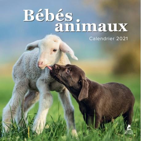 Bébés animaux - Calendrier 2021