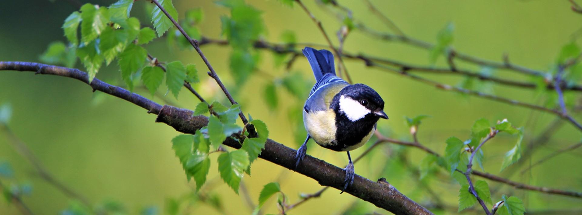 Oiseaux de nos jardins - Calendrier 2022