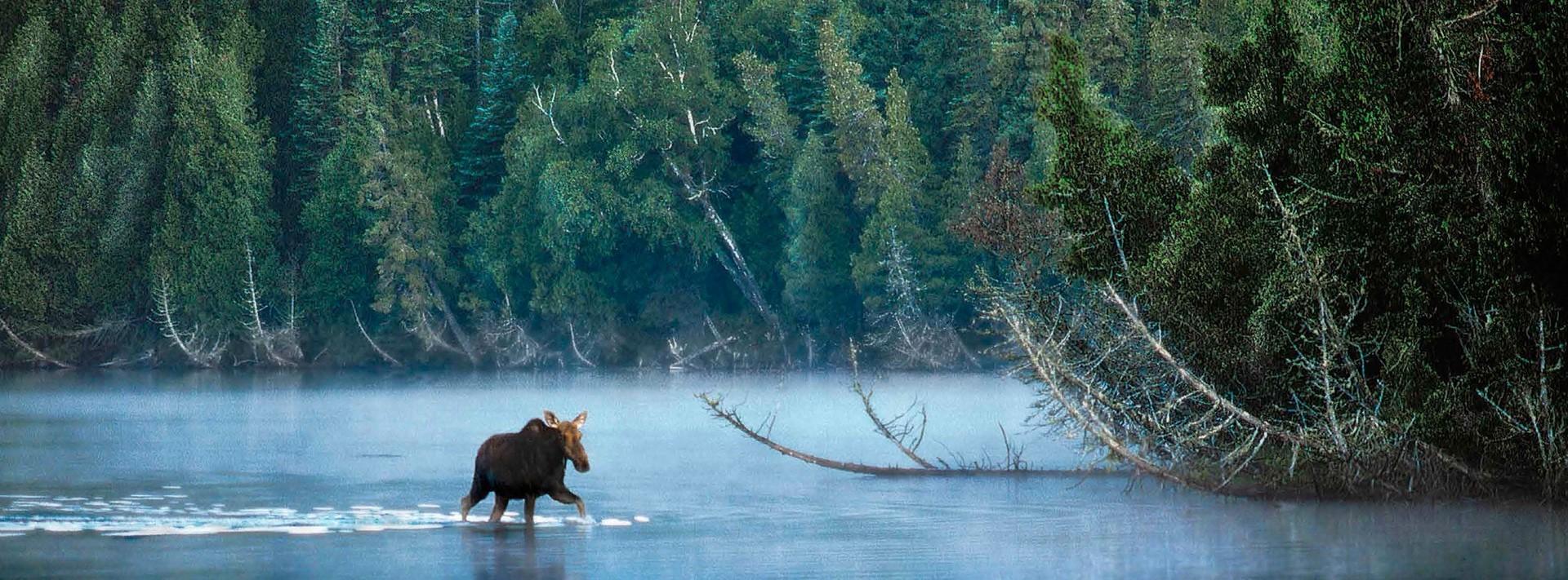 Collection de beaux-livres de nature et de paysages du monde entier